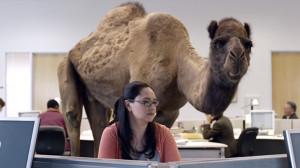geico-camel-hump-day.jpg
