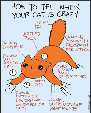 Crazy Cat Quotes chart -- I thought it was if he was breathing. :)