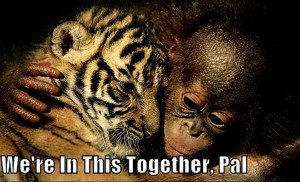 Animal Humor tiger & monkey funny