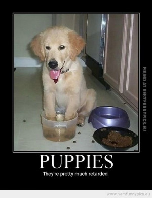 Funny Picture - Puppies they are pretty retarded