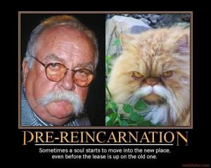 funny reincarnation