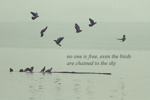 birds, bob dylan, quote, water - inspiring picture on Favim.com