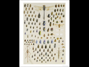 One Hundred and Fifty Insects Dominated at the Top by a Large ...