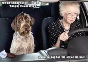 ... funny photos from internets check out funny captions how me a dog