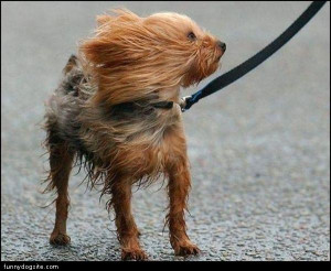 Windy Day Quotes Windy-dog.jpg