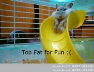 too-fat