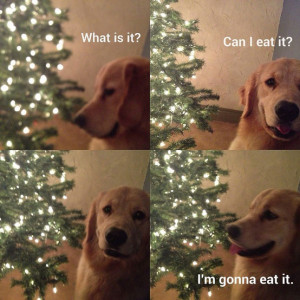... Not To Smile When Viewing These Funny Animal Pictures (39 Pics