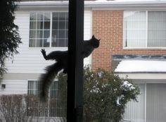 nosey neighbor more nosey neighbor 1