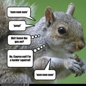 Even Squirrels Quote Eddie Izzard