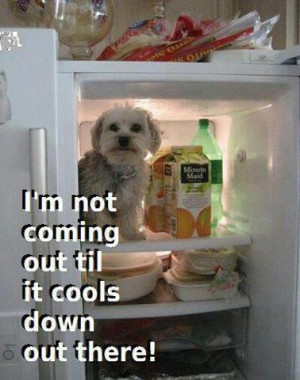 not coming out till it cools down out there…