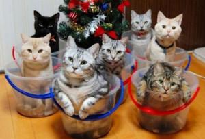 Tenere in ordine la casa in presenza di gatti