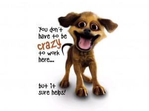 Funny Sayings Crazy Dog Wallpaper with 1024x768 Resolution