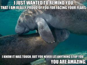 Manatee Hugging Shark