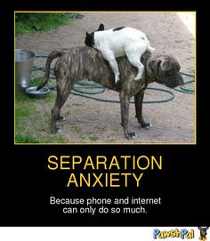 Separation Anxiety | PawshPal.com More