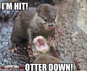 Otter Down – Funny Animals | 1000 Funny Pictures