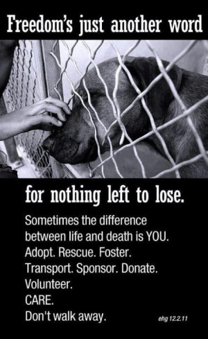 Adopt, foster, sponsor, transport, donate, volunteer. It may be the ...