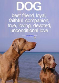 Dog #besfriend #loyal #faithful #companion #true #loving #devoted # ...