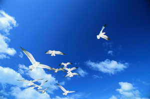 The Sky as Clear as a CrystaL