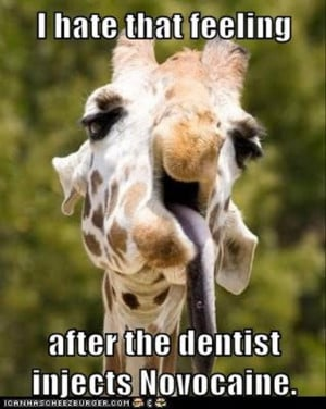 Dentists Funny Pictures Of Animals Photos