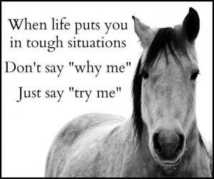 Horse People Quotes (FB)
