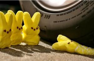 marshmellow bunny run over Image