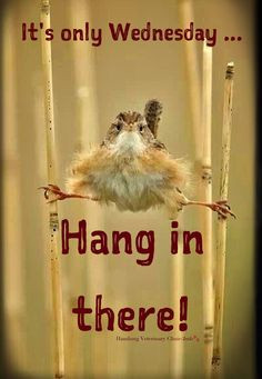 Wednesday Humor - Animal funny: Happy Wednesday! Hang in there. The ...