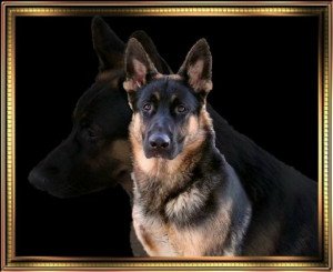 German Shepherd Dog Quotes