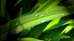 Leaves-Grass_Wallpapers for desktop