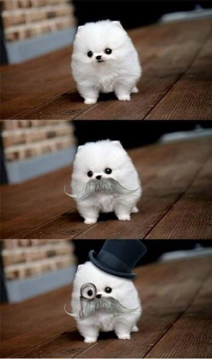 Funny photos funny cute puppy dog detective mustache