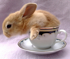 Funny Rabbit In Tea Cup