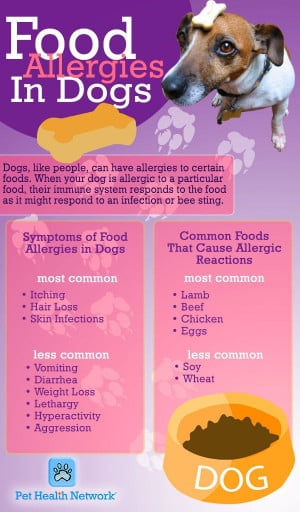 Food allergies in dogs #pets