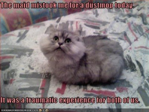 funny pictures cat looks like dustmop - Wacky Wednesday