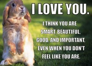 ... Wallpapers, Bunnies Quotes, Funny Animal Photos, Bunnies Rabbit