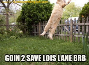 super funny quotes. Lolcats 15: Best funny Cat