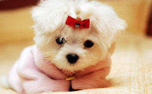 cute dog - Dogs Wallpaper
