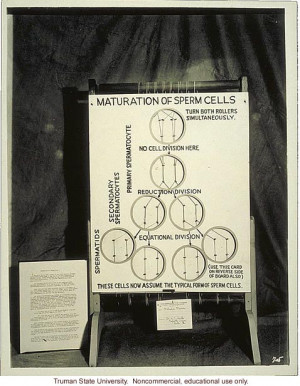 Maturation of sperm cells,& 3rd International Eugenics Conference