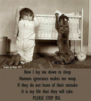 Doggie prayers