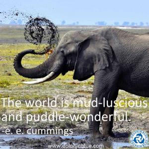 Elephant Quotes Inspirational For inspiration.
