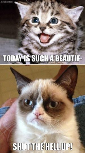 grumpy cat (25)