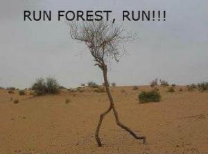 Run Forrest, Run!!