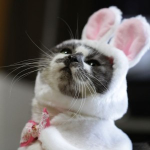 Rabbit Cat