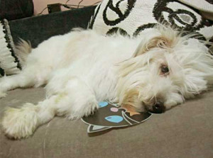 Submitted by starsohmy:This is my sweet loyal dog, Puffy. I took her ...