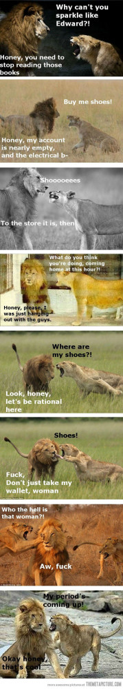 Funny photos funny lion female angry male