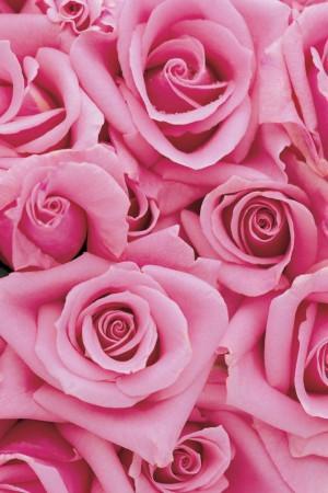 ばら 薔薇 バラ 待ち受け の画像をもっと見る?