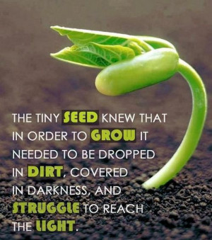 The Tiny Seed Knew Life Quotes / Share Life Quotes
