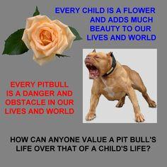 pit bull bull quotes