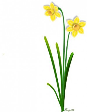 Daffodil+flower+clip+art