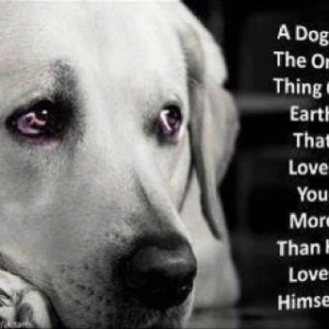 Support the Animal Rescue Site!!