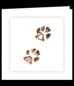 Pet Paw Prints Zazzle Print