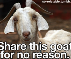 Funny Goat Pictures With Quotes Funny daily - goat